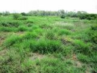 P134:(50*100) PLOT AT RUIRU NEAR TORO STATION